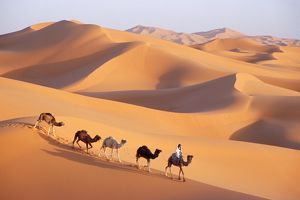 Morocco - Camel train, Berber with Dromedary Camels in the great sand dunes of Erg Chebbi at Merzouga
