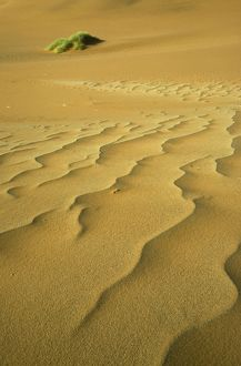 Namibia - Structural forms in the sand of the Namib Desert and a nara bush (Acanthosicyos