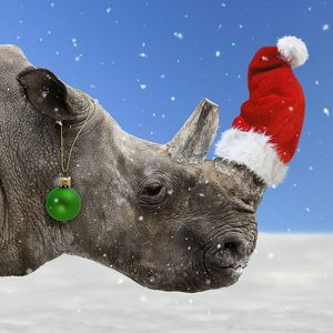 Northern White Rhinoceros in snow with Christmas