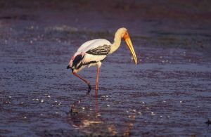Painted STORK - standing