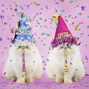 cute/persian seal point kittens wearing happy birthday