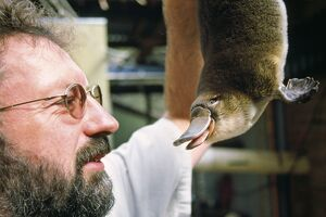 Platypus research - scientist with 'Mackenzie' - newborn