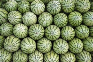PM-10251 Water melons for sale in India (but cultivated widely elsewhere)