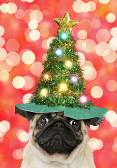 Pug dog wearing Christmas tree hat with lights