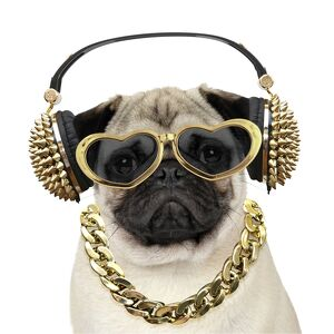Pug dog wearing gold headphones and heart shaped sunglasses
