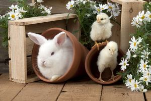 RABBIT & CHICKS - Mini Ivory Satin Rabbit - sitting in flower pot with chicks