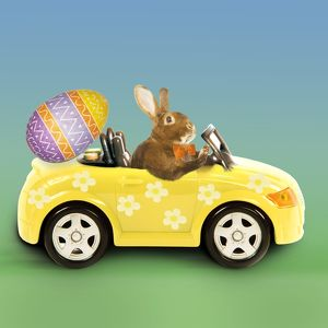 Rabbit - Easter Bunny driving car with Easter egg
