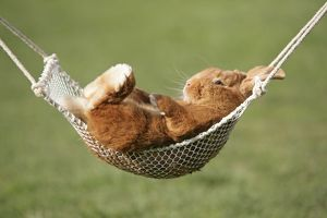 Rabbit lying down in a hammock