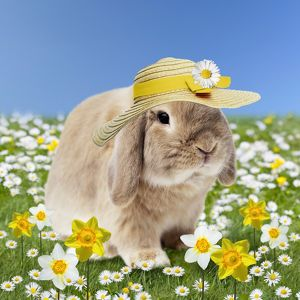 Rabbit in spring wearing an Easter bonnet hat
