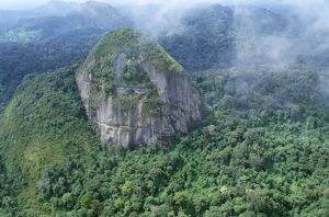 Rainforest - aerial view of Amazon canopy