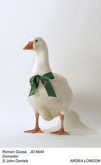 Roman GOOSE - with green bow