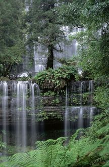 landscapes/russell falls mount field national park tasmania