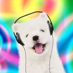 Samoyed puppy dog wearing headphones & psychedelic background