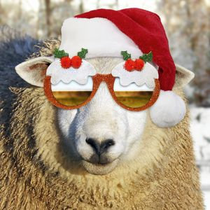 latest images march 2017/sheep wearing christmas pudding sunglasses red