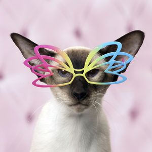 Siamese cat wearing multi-coloured glasses