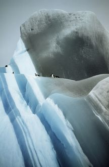 Striated Iceberg - Jade to blue with Chinstrap Penguins