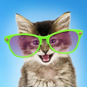 Tabby kitten cat wearing giant green fun glasses