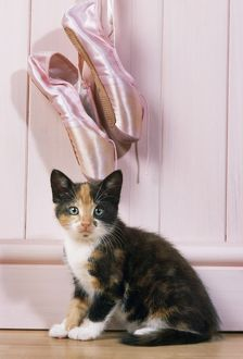 Tortoiseshell Cat - kitten with ballet shoes