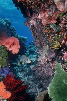 Underwater coral reef scene - Colourful marine life at depth of 12m