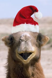 WAT-6060-M Bactrian Camel - wearing Christmas hat