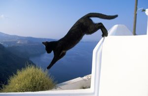 WAT-6682 CAT- Black, jumping off wall