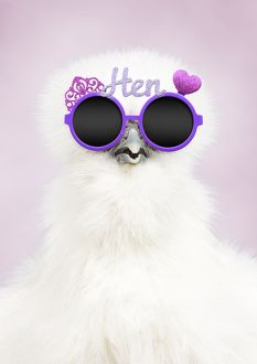 White Silkie Chicken wearing purple hen party glasses