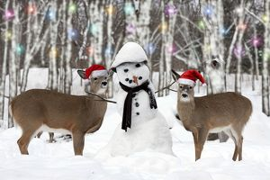 White-tailed Deer wearing Christmas hats with snowman in forest